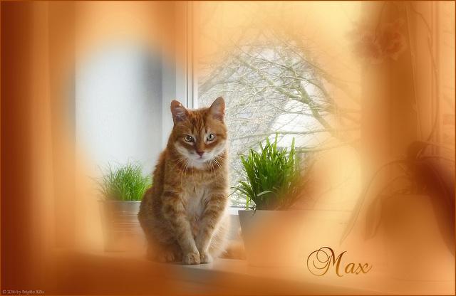 Max ♥