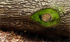 # 35 The Green Eye:-)
