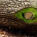 #35 The Green Eye:-)