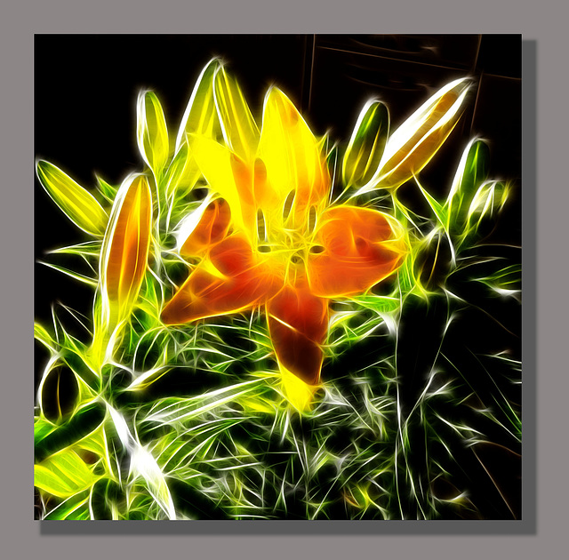 Lilium painted. ©UdoSm