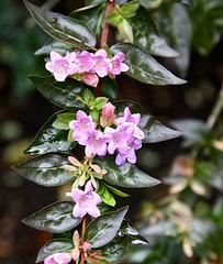 Blüten im November