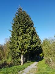 Lohmar - Waldstück in Honrath