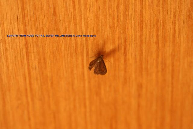 Moth on the door 01
