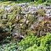 20160428 1312VRTw [D~LIP] Trockenmauer, UWZ, Bad Salzuflen
