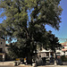Guadarrama's iconic elm in the Plaza Mayor in front of the town hall. I invite all Europeans of a certain age to wallow in this nostalgic image from their childhood!