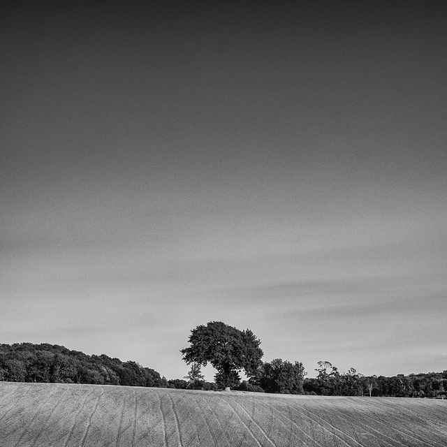 Sept 19: minimalist landscape