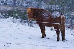 Eingeschneit - Snow bound - HFF