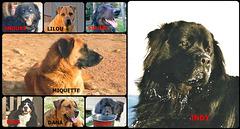 26 Août: La journée mondiale du chien