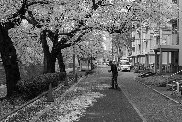 Sweeping falling petals
