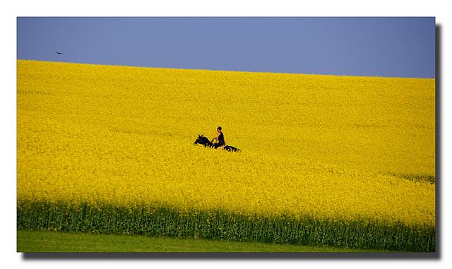 Der goldene Reiter - The golden rider (© Pipo63)