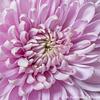 Flower 014 081017