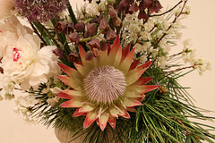 Protea power