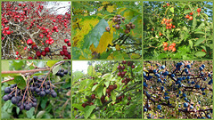 Autumnal fruits of nature