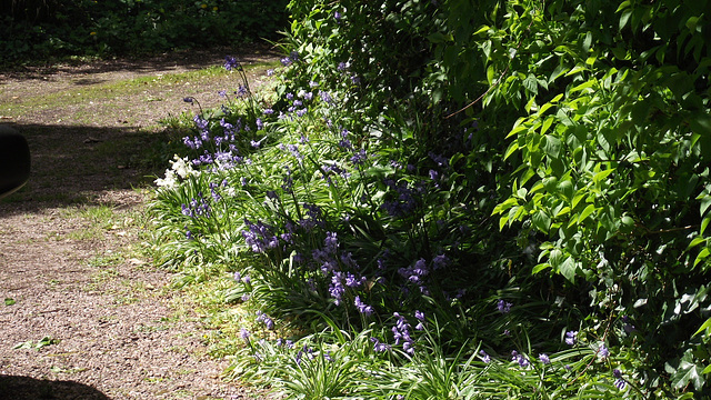 I love the bluebells edging the driveway