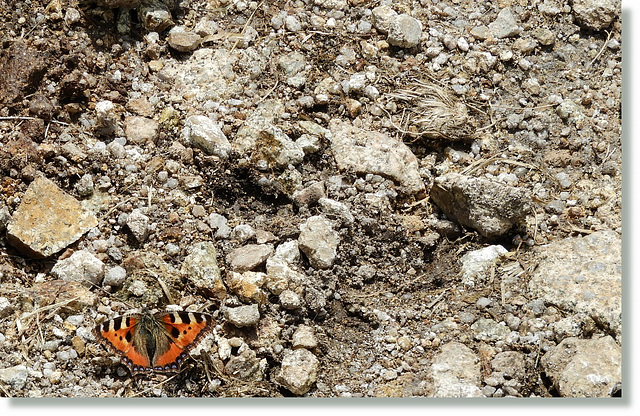 butterfly in the valley