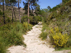 Section of a Roman road.