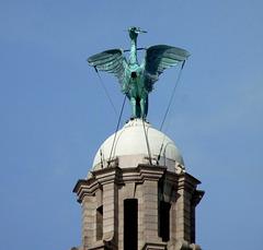 Liver Bird Sculpture