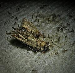 Ameisen ....