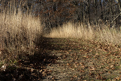 Meadow and Marshland Trail