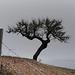 Alqueva, Lonely tree, HFF