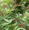 Today Garden Tour
