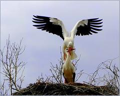 'Love'ly Storks moment...