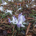 Purple Flowers covered in snow