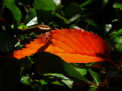 Leaf Alight