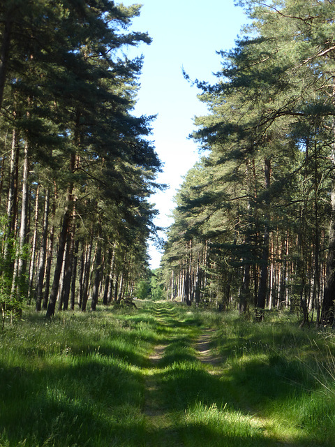Wanderweg -2