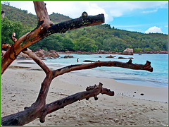 Seychelles : Anse Lazio