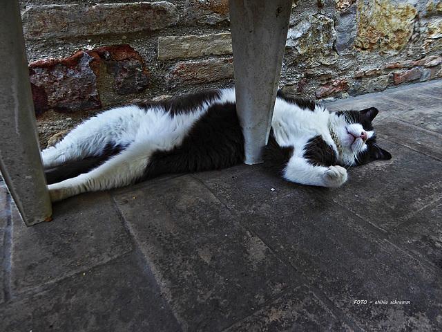 siesta - così stanco
