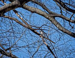 2280533 DxOdcL ·  Woodpecker