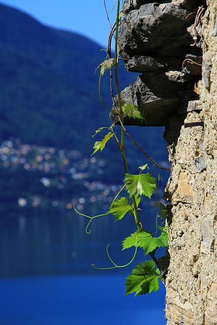 Tessin - Ticino pur!!!! (© Pipo63)