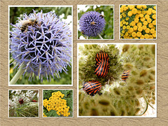 Various gardeners