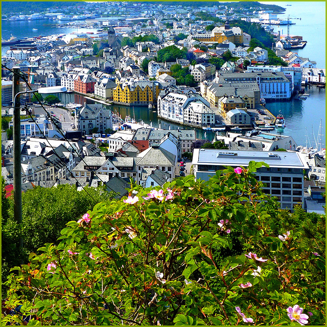 Alesund : overview of city center - (565)
