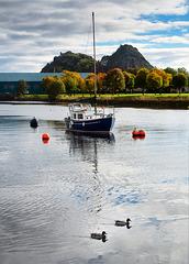 Two Wee Ducks, River Leven, Dumbarton, Scotland