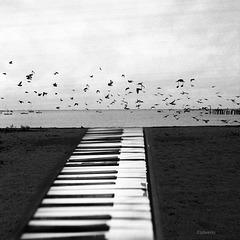 keys to the sea