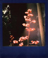 metalic polaroid - darkflower
