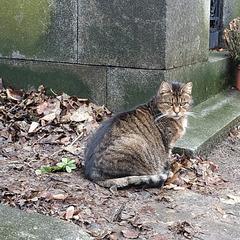 Chat ténébreux / Gloomy cat