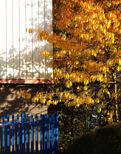 Overshadowed by Autumn