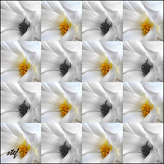 flowercheck