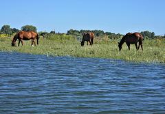 Horses on the wild