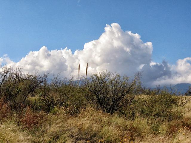 Wind & Clouds