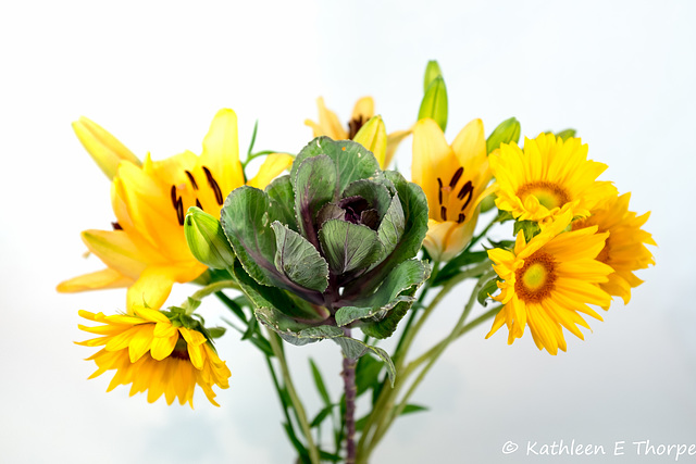 Kale, Daisies, and El Divo Lillies 092816-001