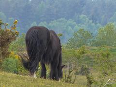 May grazing