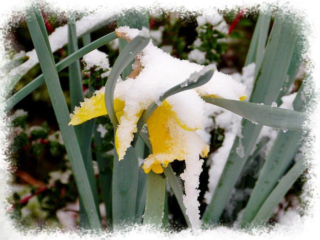 Les noces blanches du printemps
