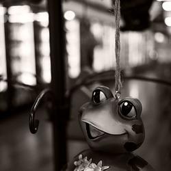 Supermarket Frog