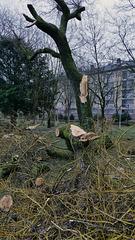 Belfort: 2018.01.03 Dégat de la tempète Eléanore 02
