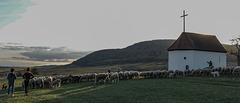 lumière du soir sur la colline du Bollenberg