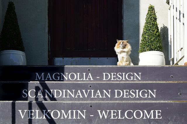 Die frisierte Katze in Reykjavik - The styled cat in Reykjavik - HFF